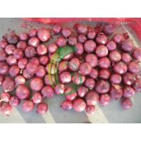 China red onion.exporter on sale