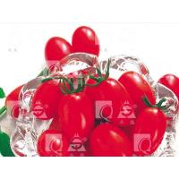 Wholesale REDROSE,TOMATO Tomato from china suppliers