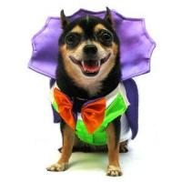 Wholesale Costumes Dogula Dog Costume - Great for Halloween ! from china suppliers