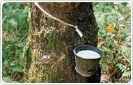 Wholesale Natural Rubber from china suppliers