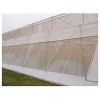Anti Insect Netting
