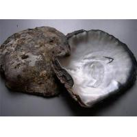 Wholesale black mother of pearl shell from china suppliers