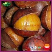 Wholesale Sell Natural Frozen Roasted Ringent Chestnut with Shell from china suppliers