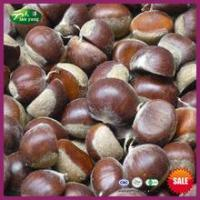 Wholesale 2015 New Crop Sweet Fresh Chinese Big Chestnuts from china suppliers