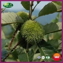 Quality 2015 New Crop Chinese Fresh Best Sale Health Chestnut for sale