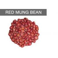 Wholesale Health & Nutrition Benefits Of Eating Red Mung Beans from china suppliers