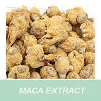 Wholesale Weight Loss Product Maca Extract Powder 100% Passed 80 Mesh from china suppliers