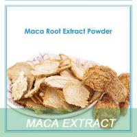 Wholesale Free Sample of Dried Maca Roots Extract Powder Has Ehance Sex Ability & Anti-anging Effect from china suppliers