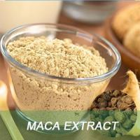 Wholesale Health product Maca extract powder from china suppliers