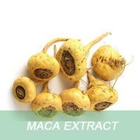 Wholesale Ma ka health free sample Maca Root Extract Powder from china suppliers