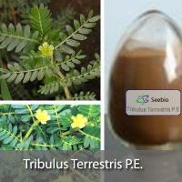 Wholesale Tribulus Terrestris P.E. from china suppliers