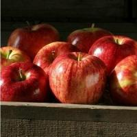 Wholesale GALA APPLES NO.31 deliver gift hamper to shenzhen from china suppliers