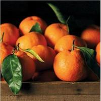 Wholesale SATSUMA MANDARINS NO.34 deliver gift hamper to shenzhen from china suppliers