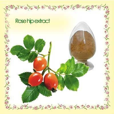 Quality best price organic rose hip p.e. for sale