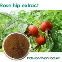 Buy cheap Pure Natural Rosa rugosa extract Rosehip extract, Rose hips powder Vitamin C 5% from Wholesalers
