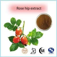 Buy cheap GMP Factory Supply Natural Organic Rose Hips P.E. from Wholesalers