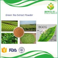 China Best Selling Health Care Product Green Tea Extract Egcg 50% with Free Sample on sale