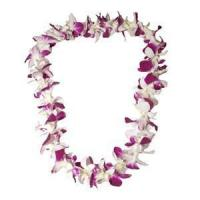 Wholesale Orchid Lei (Single, Purple & White) from china suppliers