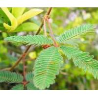 Buy cheap Mimosa Alkaloids from wholesalers