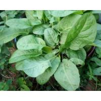 Buy cheap Rumex Acetosella Extract from wholesalers