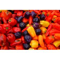 Buy cheap Natural food color Capsicum from wholesalers