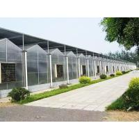 Wholesale greenhouse: Sunshine Plate Greenhouse from china suppliers