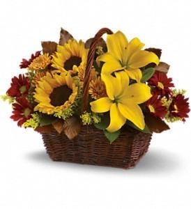 Quality Golden Days Basket [T174-2A] for sale