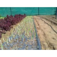 Wholesale Black Mulch Film from china suppliers