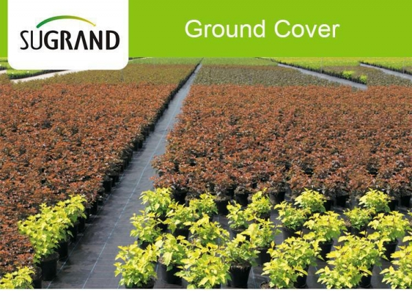 China Plastic 90GSM White Agricultural Weed Mat Ground Cover For Blueberry