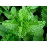 Wholesale Essential oils Mentha essential oil from china suppliers