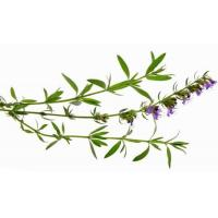 Wholesale Essential oils Hyssop Essential Oil from china suppliers