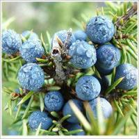 Wholesale Essential oils Juniper berry essential oil from china suppliers