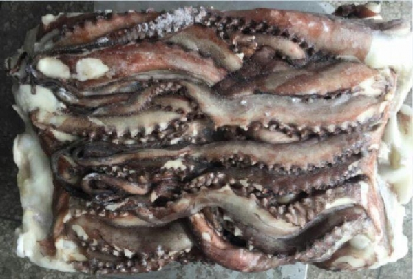 Quality Frozen Squid Arms Squid Tentacle for sale