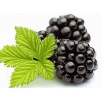 Wholesale Blackberry Extract, Blackberry Fruit Powder, Black Raspberry from china suppliers